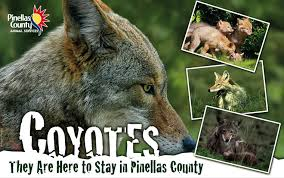 Images of coyotes and the logo from Pinellas County